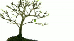 Small tree timelapse Stock Footage