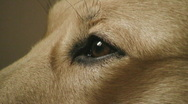 Dogs eye Stock Footage