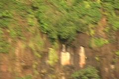 Brazil-Igazu-Falls-Toucans Stock Footage