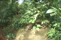 Brazil-Iguazu-Quati Stock Footage