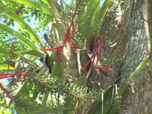 Stock Video Footage of Chitzen-Itza-Yucatan-Peninsula-Tree-2