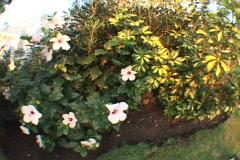 Stock Video Footage of Flower-Bush