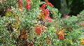 Colorful Bush Footage