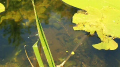 Dragonfly on green leaf Stock Footage