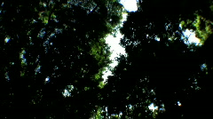 Point-of-View Through Rainforest Trees - stock footage