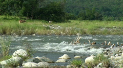 River in Manabo, Philippines #1 - stock footage