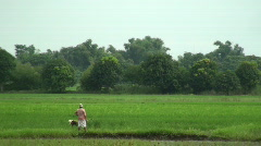 workers in rice field - stock footage