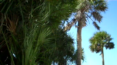 tropical wind - stock footage