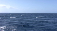 Humpback Whale Breach near the boat in Maui Stock Footage