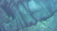 White Tip Shark swims over reef at Mala Wharf Stock Footage