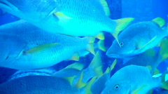 Exotic Fish 1446 Stock Footage