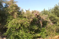 Crane shot trees to Parthenon below the acropolis in Athens, Greece Stock Footage