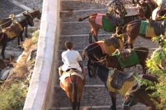Donkeys carry tourists up to the village of Thera on Greek island of Santorini, Stock Footage