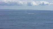 Stock Video Footage of Pod of whales surfacing in Maui