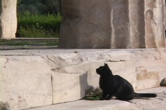 Black cat chases butterfly at ancient Greek Temple Stock Footage