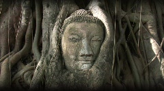Buddha head overgrown by tree, Thailand Stock Footage
