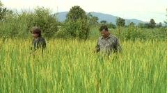 Farmers in Rice Field Stock Footage