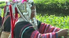 Tea Harvesters Stock Footage