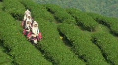 Tea Pickers Arriving Stock Footage
