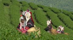 Tea Workers Stock Footage