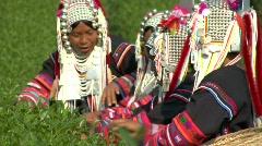 Women Picking Tea Stock Footage