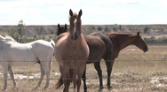 Horses at fence Stock Footage