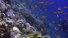 Scuba Diving Fish photographer Stock Footage