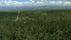 Aerial low over a cocnut or palm tree plantation, crossing a concreted road Stock Footage