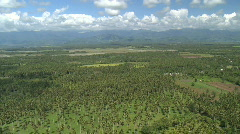 Aerial high over a coconut or palm tree plantation with a scattered rural    Stock Footage