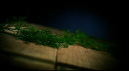 Dill falling on Kitchen Board Stock Footage