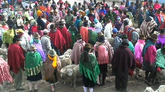 Sheep Market,  Zumbahua, Ecuador Stock Footage