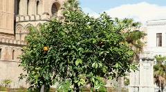 Multiple shots of tangerine tree Stock Footage