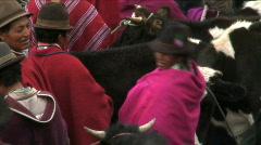 Cattle Market, Guamote, Ecuador Stock Footage