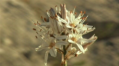 White flower Stock Footage