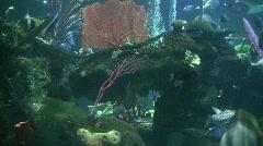 Underwater scenery Stock Footage