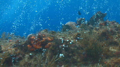 Bubbles over coral reef 30p Stock Footage