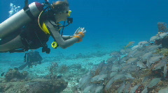 Diver taking photo of school of fish 30p Stock Footage
