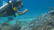 Stock Video Footage of diver taking photo of school of fish 30p