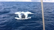 Stock Video Footage of Whale right and under boat