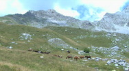 Horses graze on the mountain pastures Stock Footage