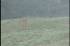 Monster Buck just out of velvet Stock Footage