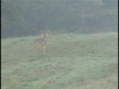 Stock Video Footage of Monster Buck just out of velvet