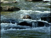 Stock Video Footage of Rocky, Mountain Stream