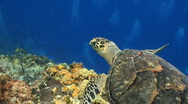 Turtle swimming over coral bright Stock Footage