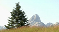 View of the pine and mountain peaks Stock Footage