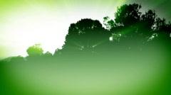 360 Trees bg sh lr - stock footage