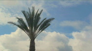 Palm Cloud Time Lapse Stock Footage