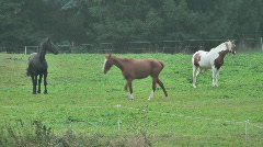 Horses - stock footage