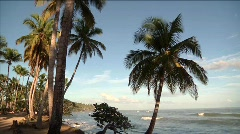 Las Terrenas Waves and Palm 3 Stock Footage