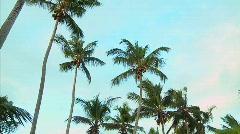 Las Galeras Palms in Wind Stock Footage